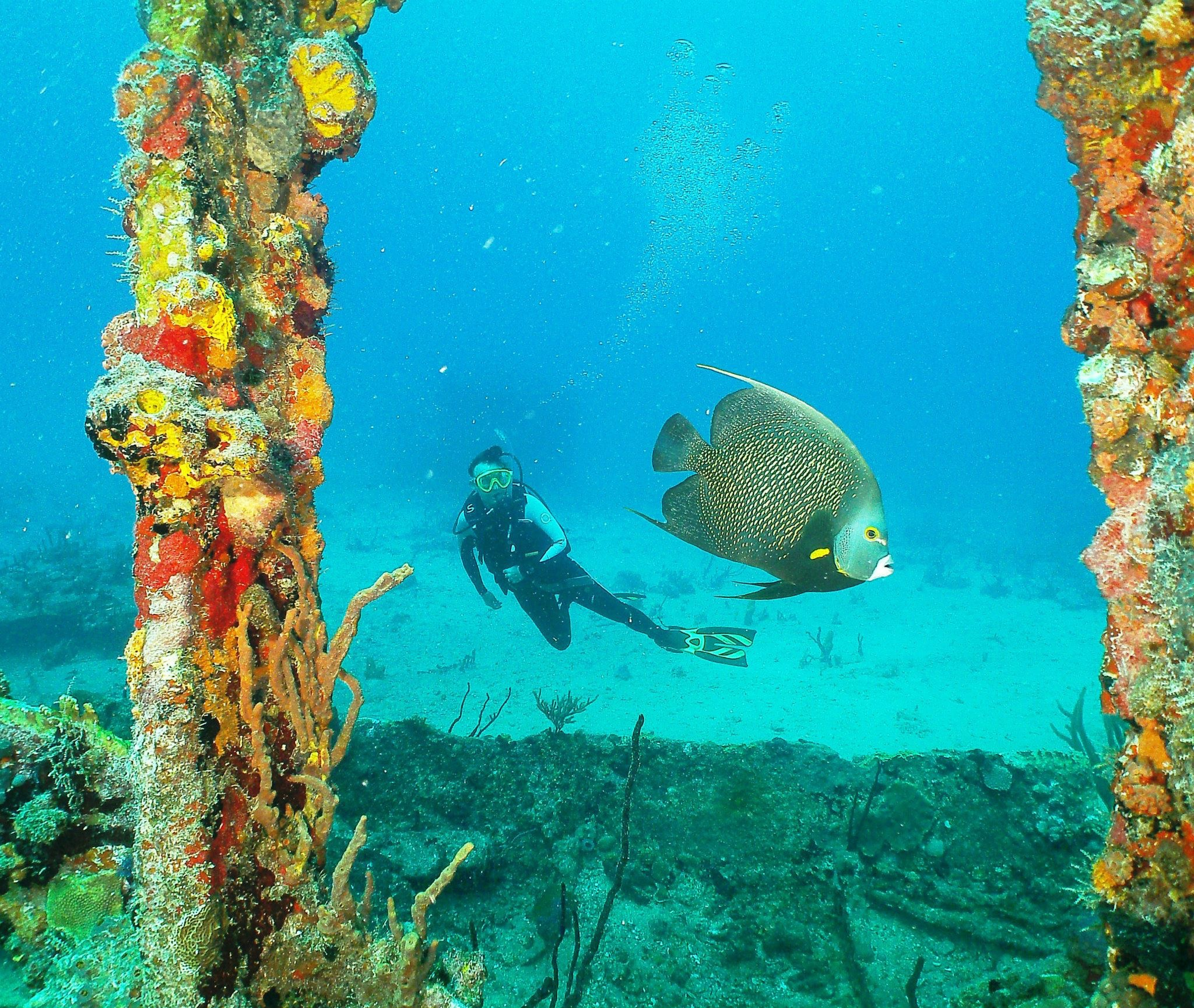 Diver with angelfish at wreck