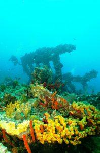 RMS RHone sponges